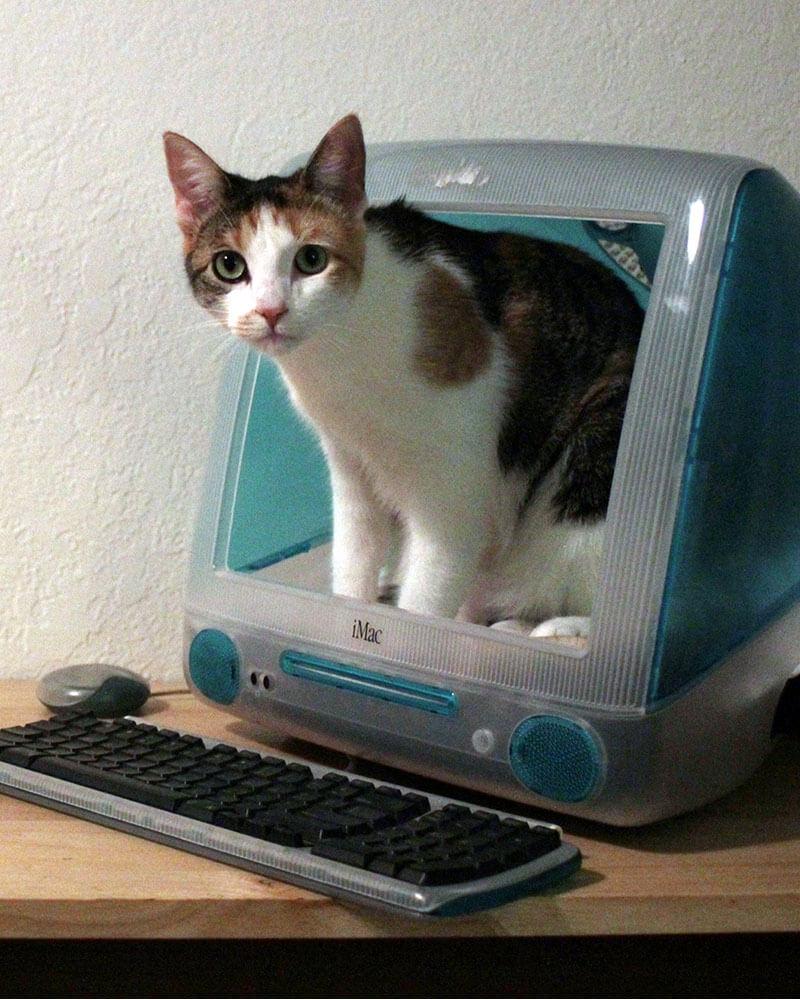DIY iMac Cat Bed
