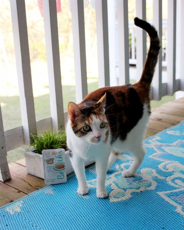 DIY Cat Grass and Catnip Planter