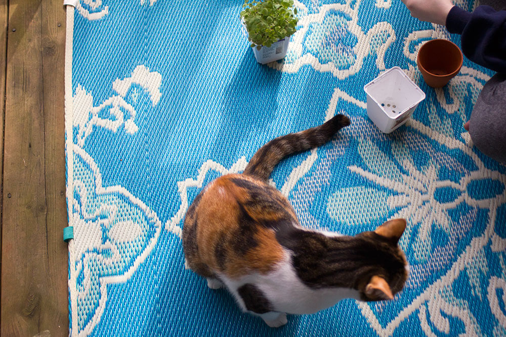 DIY Cat Grass and Catnip Planter to WOW Your Cat